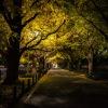 夜の東京散歩:夜は静かな外苑銀杏並木
