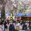 東京散歩:千鳥ケ淵と靖国神社