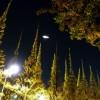 夜の東京散歩:外苑前の銀杏並木