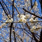 東京散歩:葛西臨海公園、列島大荒れ東京は晴天