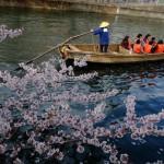 東京散歩:門前仲町、大横川沿いの桜