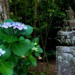 北鎌倉:東慶寺の紫陽花