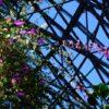 東京散歩:ここは亜熱帯『夢の島熱帯植物館』