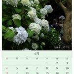 6月のカレンダー: 北鎌倉 明月院