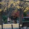 静かな晩秋の北の丸公園