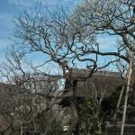 北鎌倉散歩:東慶寺