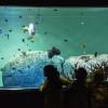 葛西臨海水族館:生き残って欲しいマグロ二匹