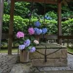 北鎌倉散歩:紫陽花の明月院