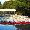 東京散歩:蜩が啼いている「井の頭公園」