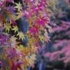 東京散歩:北の丸公園の紅葉