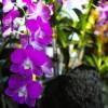 東京散歩:寒い日は「熱帯植物館」へ行こう