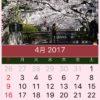 4月のカレンダー/京都高瀬川の桜
